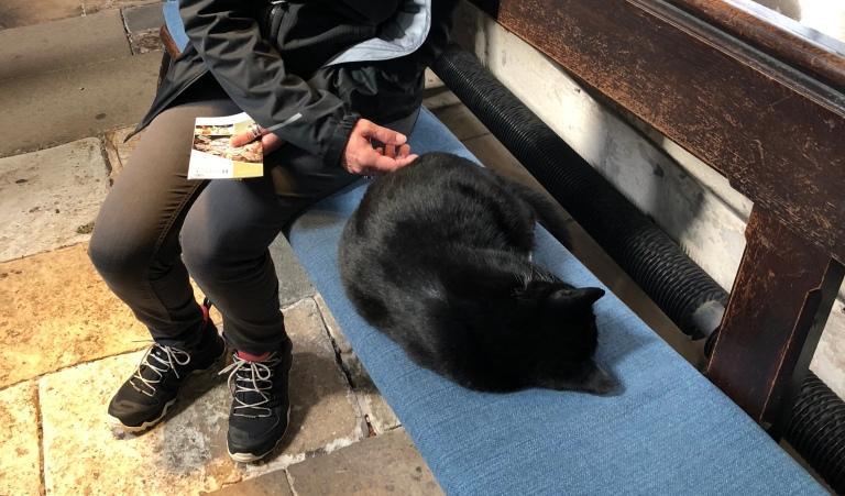 Seit Generationen gibt es eine Chapel Cat in Rosslyn und sie hat Haus- und Hofrecht. Und auch von den vielen Besuchern lässt sie sich nicht bei ihrem Mittagsschlaf stören